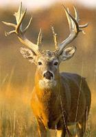 Hunting Trips-R-Us, Directory for Hunting Guides and Outfitters