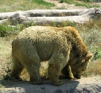 Big Game Hunting Trips Across America