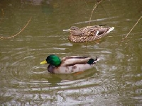 Variety of Birds, Waterfowl, Small and Big Game Hunting