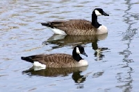 Bird Game Hunting trips like this Arkansas Duck Hunting