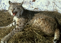 Small Game Hunting Trips